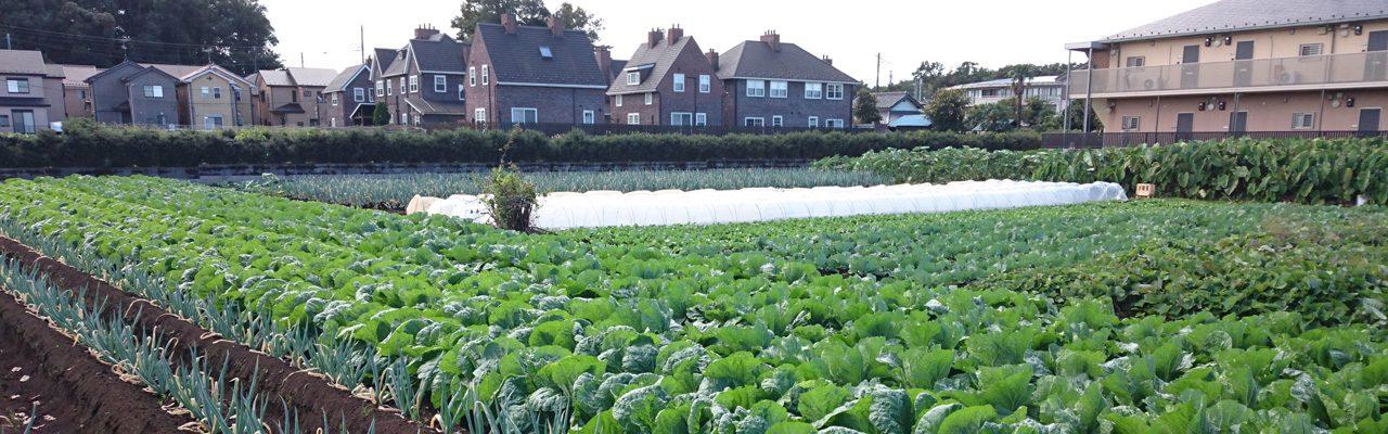 つくたま塾「農地を活かすまちづくりのための制度改革の動向」のお知らせ